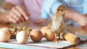 Kurczątko jest na kuchennym stole obok całych jajek zdjęcie wideo