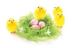 kurczątek jajek gniazdeczko Fotografia Royalty Free