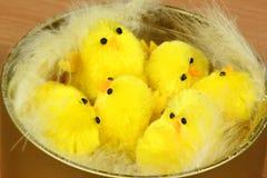 kurczątka Easter obraz royalty free