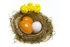 kurczaków jajek gniazdeczko Obraz Royalty Free