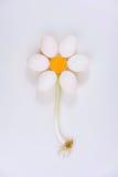 Kurczaków jajka układają w kwiatu kształt Fotografia Royalty Free