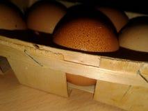 Kurczaków jajka w gracie greenfield obraz stock