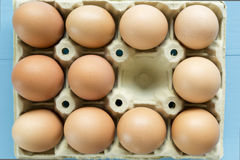 Kurczaków jajka w jajecznej filiżance Zdjęcie Stock