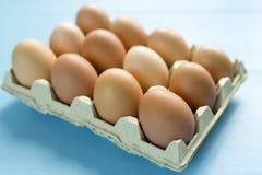 Kurczaków jajka w jajecznej filiżance Zdjęcie Royalty Free