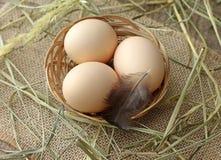 Kurczaków jajka w łozinowym koszu Obrazy Stock