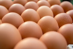 Kurczaków jajka w papierowym panelu Zdjęcia Royalty Free