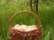kurczaków koszykowi jajka Zdjęcia Stock