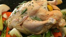 kurczak chów z wolnym wybiegiem Fotografia Stock