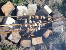 Kurczak dalej otwierał ogień Fotografia Stock