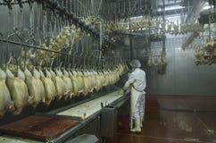 Kurczak fabryka Fotografia Stock