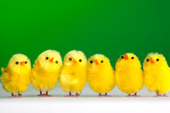 kurczak grupa Zdjęcia Royalty Free