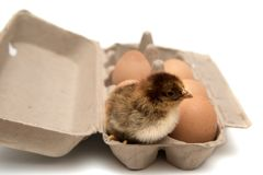 Kurczak i jajka w kartonie zdjęcia stock