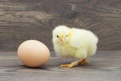 Kurczak i jajko Zdjęcie Royalty Free