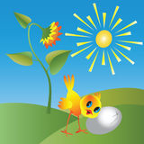 Kurczak i słonecznik Zdjęcia Stock