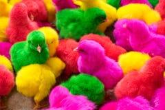 Kurczak, kolor folował kurczaka w gospodarstwie rolnym, produkcja dla wiele kolor c Fotografia Royalty Free