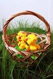 kurczak koszykowa trawa Zdjęcia Royalty Free