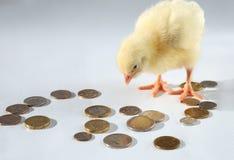 kurczak monety zdjęcia royalty free