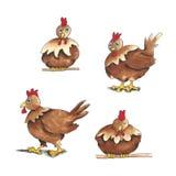 Kurczak - podstawowy royalty ilustracja