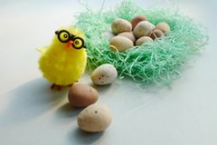 Kurczak przyglądający z gniazdeczka up fotografia royalty free