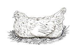 Kurczak w gniazdeczku Zdjęcie Royalty Free