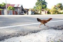 Kurczaka bieg Zdjęcia Stock