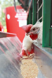 kurczaka dozownik zdjęcie royalty free