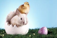 kurczaka Easter królik Obraz Royalty Free