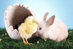 kurczaka Easter królik Obrazy Royalty Free