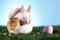 kurczaka Easter królik Fotografia Stock