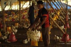 Kurczaka gospodarstwo rolne Fotografia Stock
