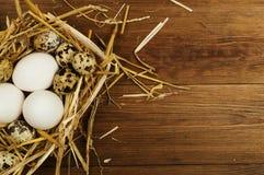 Kurczaka i przepiórki jajka na drewnianym stole tło barwiący Easter jajek eps8 formata czerwony tulipanu wektor Fotografia Royalty Free