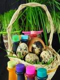Kurczaka i przepiórki jajka w koszu otaczającym karmowymi koloryt Obrazy Stock