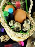 Kurczaka i przepiórki jajka w koszu otaczającym karmowymi koloryt Zdjęcia Royalty Free