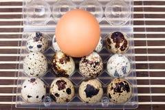 kurczaka jajeczna jajek przepiórka Zdjęcie Royalty Free