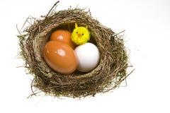 kurczaka jajek gniazdeczko Obrazy Royalty Free