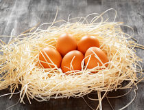kurczaka jajek gniazdeczko Zdjęcia Stock