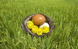 kurczaka jajek trawy gniazdeczko przekręcający Zdjęcie Stock