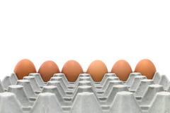 Kurczaka jajka tace Fotografia Royalty Free