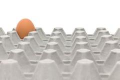 Kurczaka jajka tace Zdjęcie Royalty Free