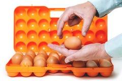 Kurczaka jajko kłama w palmie plastikowy zbiornik Zdjęcie Stock
