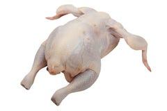 kurczaka jedzenie Zdjęcia Royalty Free