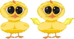 kurczaka kolor żółty Zdjęcia Royalty Free