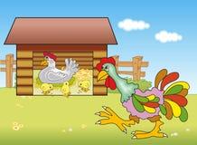 kurczaka kurczątek kogut Obrazy Royalty Free