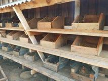 Kurczaka mieszkanie Fotografia Stock