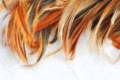 Kurczaka piórka tekstura Obraz Stock