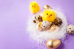 Kurczaki blisko gniazdeczka fotografia stock