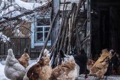Kurczaki blisko starego domu stary dom fotografia stock