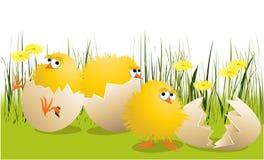 kurczaki Easter royalty ilustracja