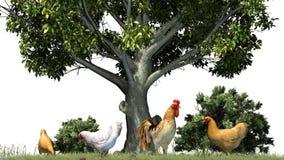Kurczaki i kogut w naturze Fotografia Stock