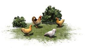 Kurczaki i kogut w trawie i krzakach Obrazy Stock